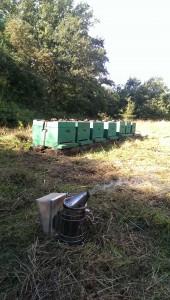 Bienenstöcke auf unserer Wiese